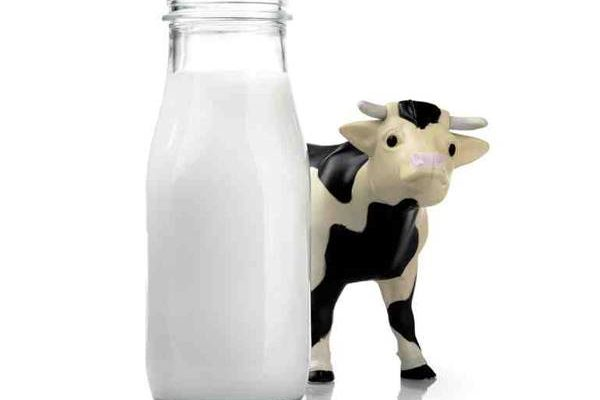 Why you should not drink cow's milk?
