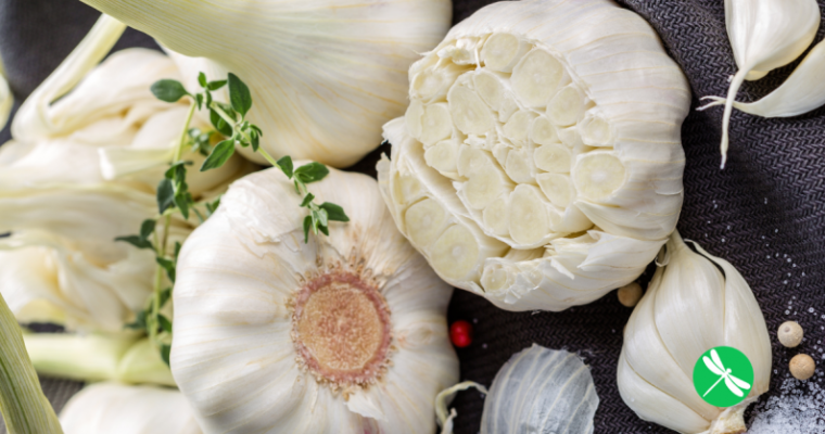 Garlic Proven 100 Times More Effective Than Antibiotics, Working In A Fraction of The Time