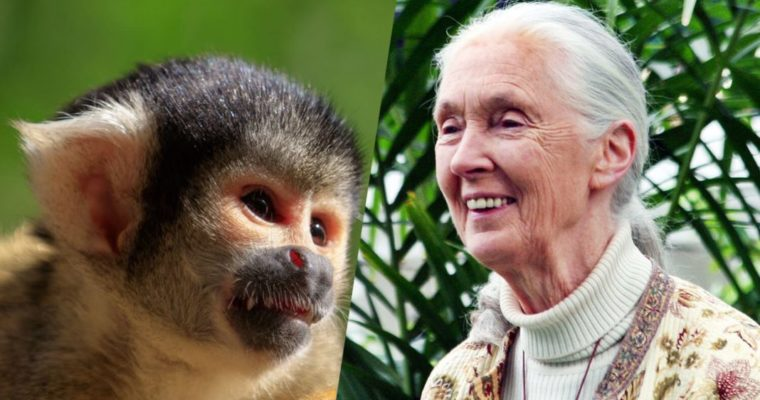Jane Goodall Helps Rescue 26 Squirrel Monkeys From Lab Testing