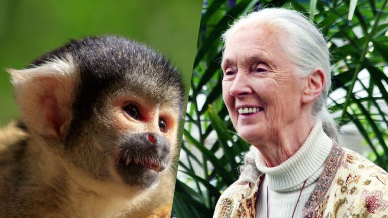 Jane Goodall Helps Rescue 26 Squirrel Monkeys From Lab ...