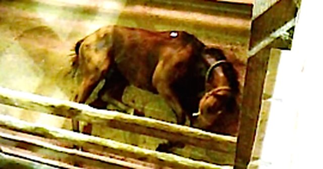 30,000 Horses Are Shipped From The U.S. To Canada To Be Killed Every Year