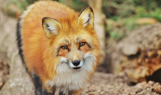 New York Bill Pushes to Ban Fur by 2021