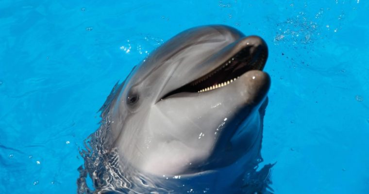 Iran to Ban Parks That Promote Dolphin Cruelty