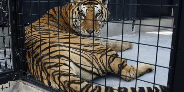 Madrid Bans Wild Animal Circuses