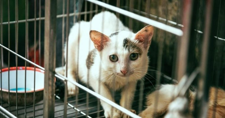 Why Switzerland May Soon Ban Animal Testing